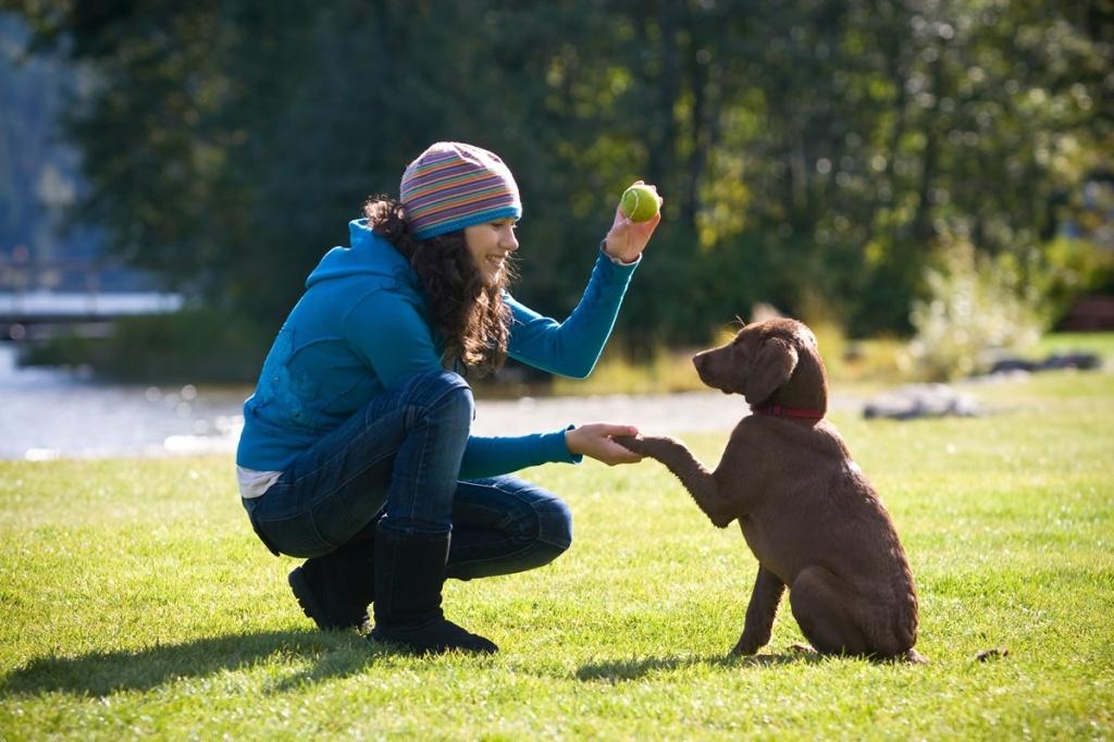 """В парке """"Северное Тушино"""" будут проходить бесплатные занятия по фехтованию и дрессировке собак"""